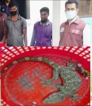 কলাপাড়ায় ৪ জন বন্যপ্রাণী পাঁচারকারী আটক
